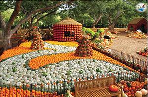 خبر پاییز در باغ کدو تنبل دالاس
